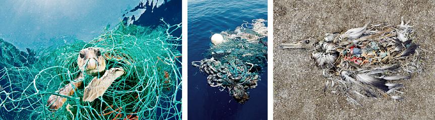 海洋生物への影響